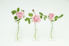 Trois vases avec de belles roses cutted Photographie stock libre de droits
