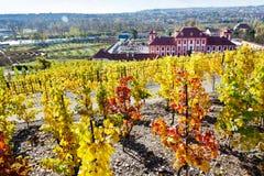 Troja castle, historical St. Claire vineyards, Troja Botanical G Stock Photography