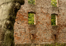 Trojborg castle ruin near Tonder, Denmark. Showing a tree in front of a brick wall with windows stock images