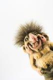 troll сувенира Стоковое фото RF