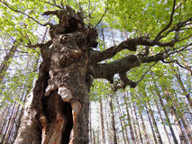 Troll Forest's Στοκ φωτογραφίες με δικαίωμα ελεύθερης χρήσης