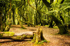 The Troll Forest Royalty Free Stock Photography