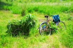 Trolley with freshly cut grass. In the meadow Royalty Free Stock Images