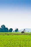 Trolley i mitten av padifältet Royaltyfri Fotografi