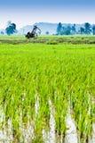 Trolley i mitten av padifältet Arkivfoto