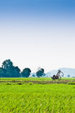 Trolley in the middle of padi field Royalty Free Stock Photography