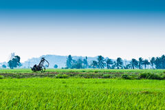 Trolley in the middle of padi field Royalty Free Stock Photos