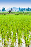 Trolley in the middle of padi field Stock Photo