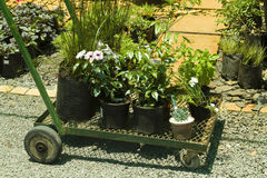 Trolley with plants. In a herb and flower plants greenhouse organic nursery Stock Photo