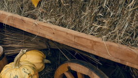 The trolley stands at the exhibition, with pumpkins and other vegetables stock video