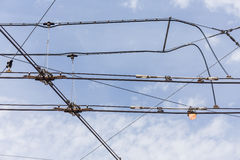 Trolley trolleybus electricity cable lines Royalty Free Stock Image