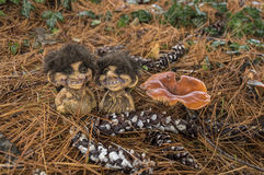 Trolls and mushroom Royalty Free Stock Images