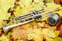 Tromba nel parco di autunno Immagini Stock Libere da Diritti