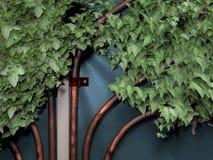 Trombetas misteriosas retorcidas com hera Foto de Stock Royalty Free