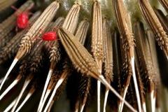 Trombidium holosericeum on dandelion seeds Royalty Free Stock Images