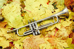 Trompete in Herbst Park Stockfoto