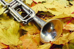 Trompete in Herbst Park Stockbild