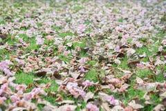 Trompette rose sur la pelouse verte photos stock