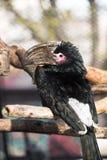Trompetter Hornbill royalty-vrije stock foto's