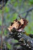 Tronçon, accroc sur un vert Arbre cassé Écorce d'arbre Photos stock