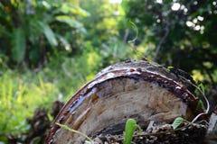 Tronçon, arbre Photographie stock