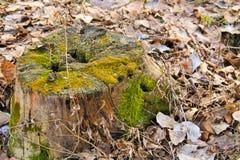 Tronçon avec de la mousse dans la forêt Photos stock