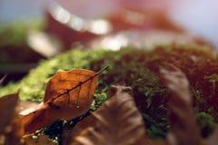 Tronçon avec de la mousse et les feuilles brunes dans la forêt image libre de droits