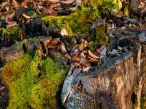 Tronçon avec de la mousse verte dans la forêt image stock