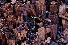 Tronçon cassé dans la forêt dans beaucoup de différents morceaux photos libres de droits