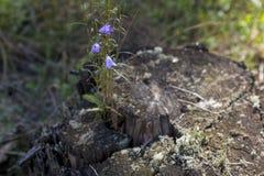 tronçon couvert de mousse près des cloches de fleurs Image stock