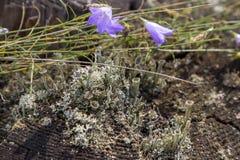 tronçon couvert de mousse près des cloches de fleurs Photographie stock libre de droits