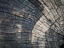 tronçon d'arbre ฺBeautiful de coupe texturisé et fond photographie stock