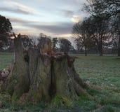Tronçon d'arbre à l'aube Images libres de droits