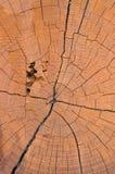 Tronçon d'arbre Photographie stock