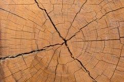 Tronçon d'arbre Photographie stock libre de droits