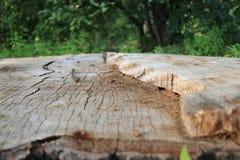 Tronçon d'arbre photos libres de droits