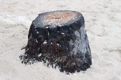 Tronçon d'arbre abandonné sur la plage image libre de droits