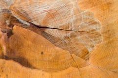 Tronçon d'arbre avec le modèle créé par la tronçonneuse Photographie stock libre de droits