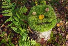Tronçon d'arbre avec le visage de la mousse Image libre de droits