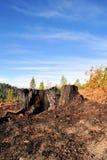 Tronçon d'arbre brûlé Photographie stock libre de droits