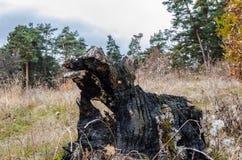 Tronçon d'arbre brûlé Photo libre de droits