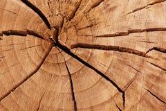 Tronçon d'arbre criqué Photographie stock libre de droits
