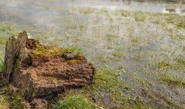 Tronçon d'arbre délabré à une banque marécageuse d'un étang naturel images stock