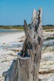 Tronçon d'arbre délabré sur la plage photos libres de droits