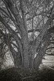 Tronçon d'arbre dans l'ombre photos libres de droits