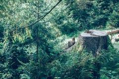 Tronçon d'arbre dans la forêt image stock