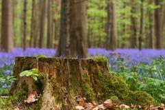 Tronçon d'arbre dans le printemps Photographie stock libre de droits