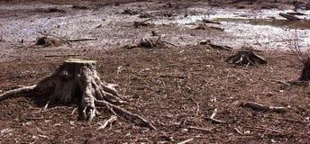 Tronçon d'arbre dans un marais Image stock