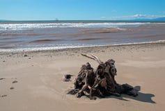 Tronçon d'arbre de bois de flottage avec des racines sous des cumulus sur la plage de Ventura en Californie Etats-Unis photos stock