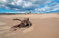 Tronçon d'arbre de bois de flottage avec des racines sous des cumulus sur la plage de Ventura en Californie Etats-Unis photos libres de droits